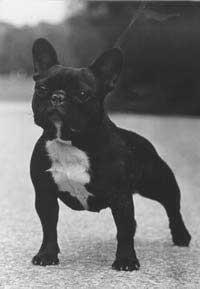 Tee kuten yli 1000 muuta koiraihmistä, ja ota Dogiumin FB-sivu seurantaan!